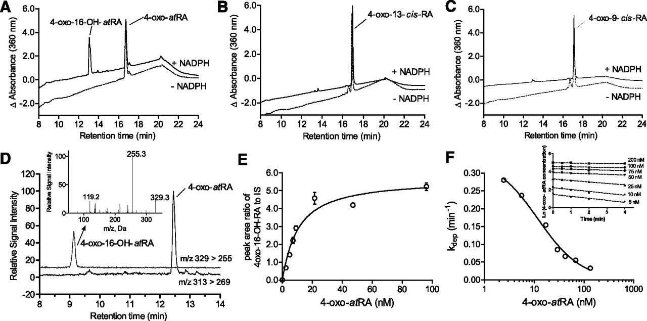 CYP26C1 Is a Hydroxylase of Multiple Active Retinoids and Interacts