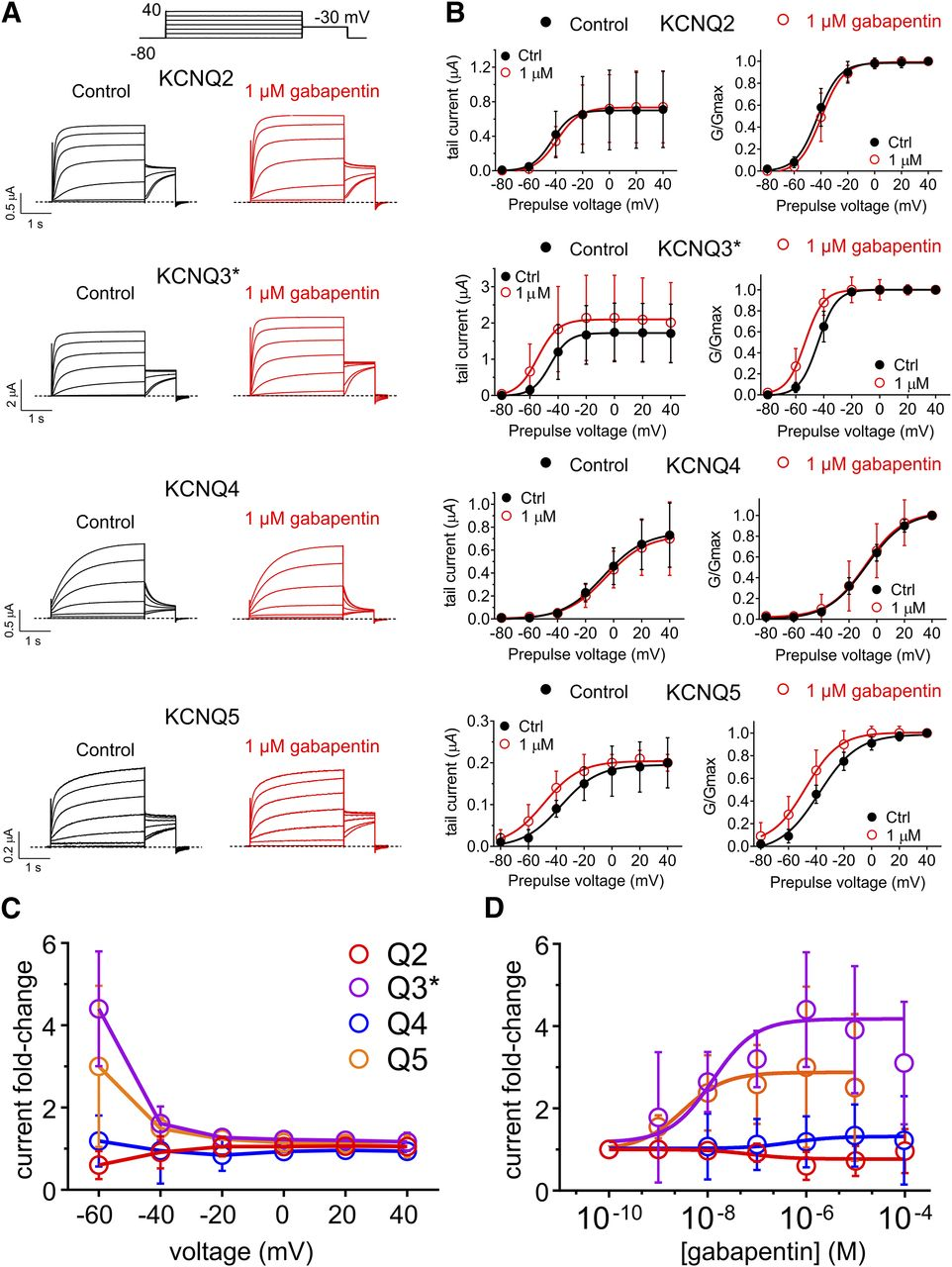 Gabapentin Is a Potent Activator of KCNQ3 and KCNQ5