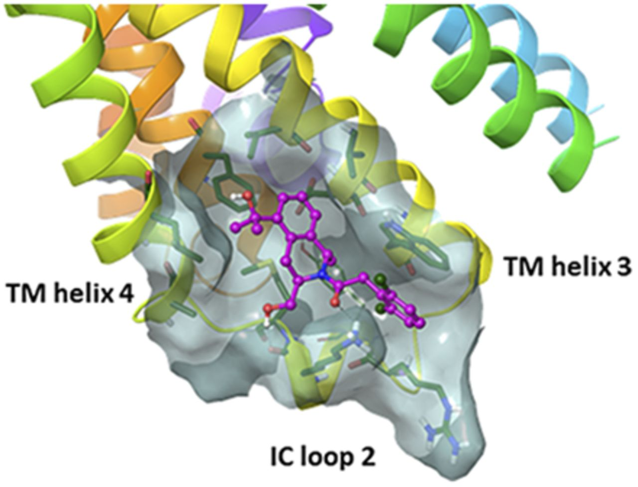 Intracellular Binding Site for a Positive Allosteric