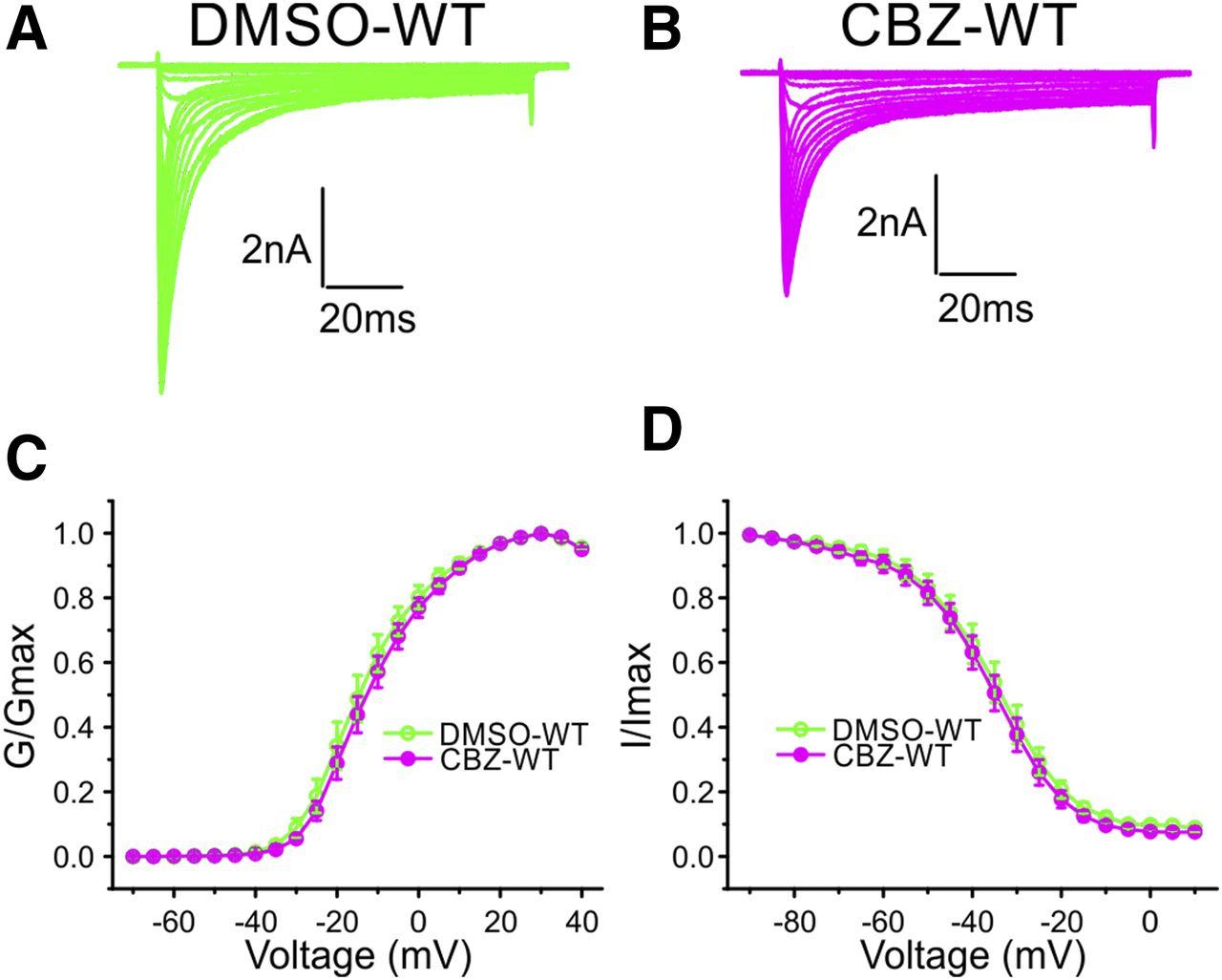 The Novel Activity of Carbamazepine as an Activation Modulator