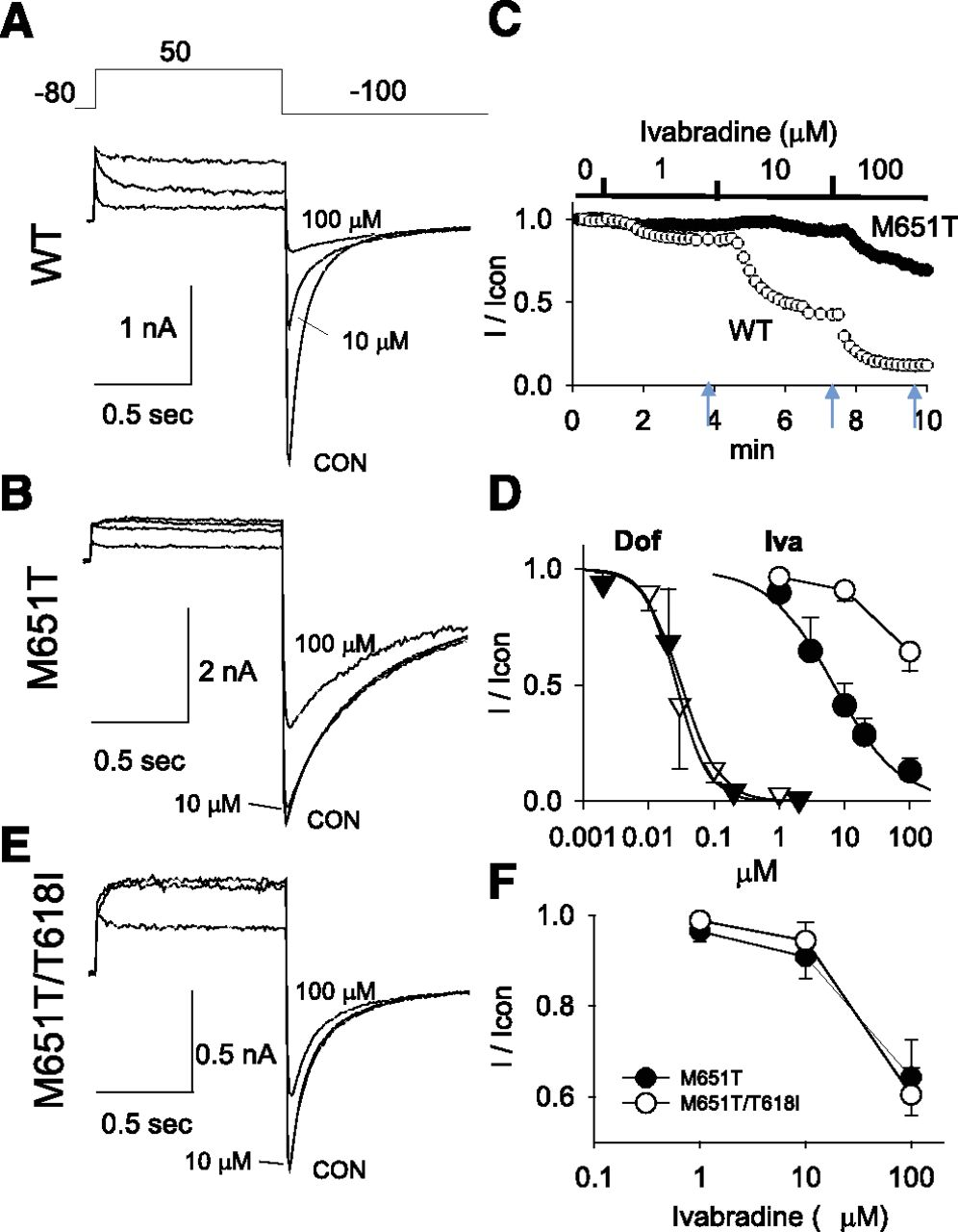 The Pore-Lipid Interface: Role of Amino-Acid Determinants of