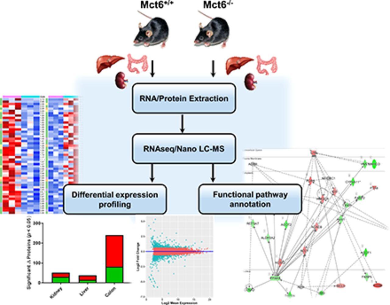 Characterization and Proteomic-Transcriptomic Investigation