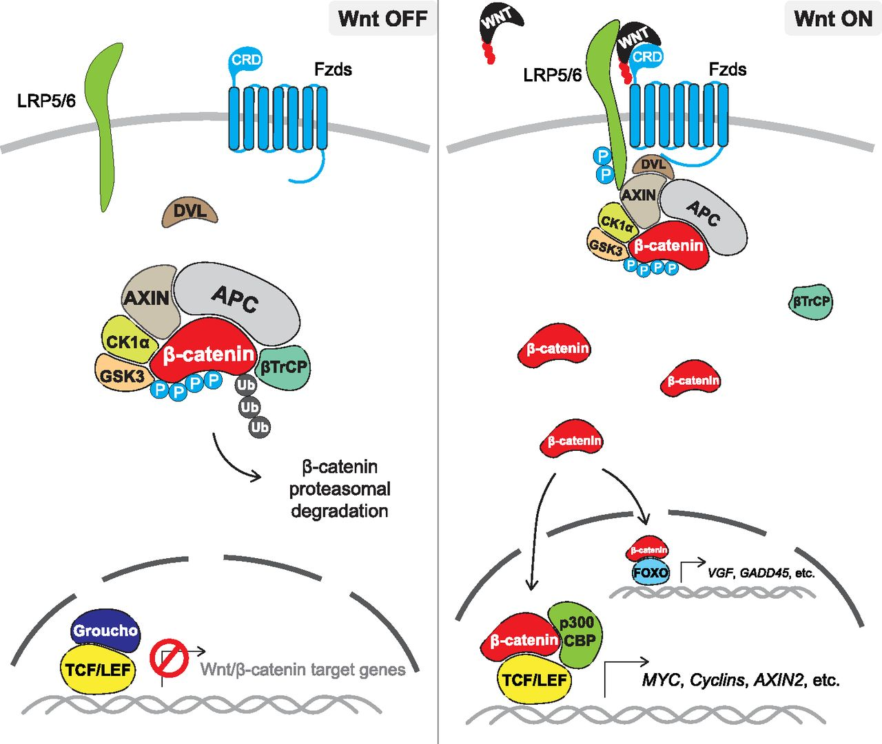 Wnt Signaling And Drug Resistance In Cancer Molecular Pharmacology